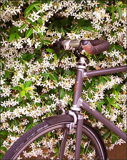 Jasmine and Bicycle