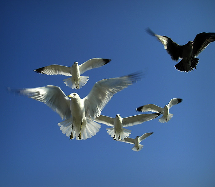 seagulls_small (91k image)